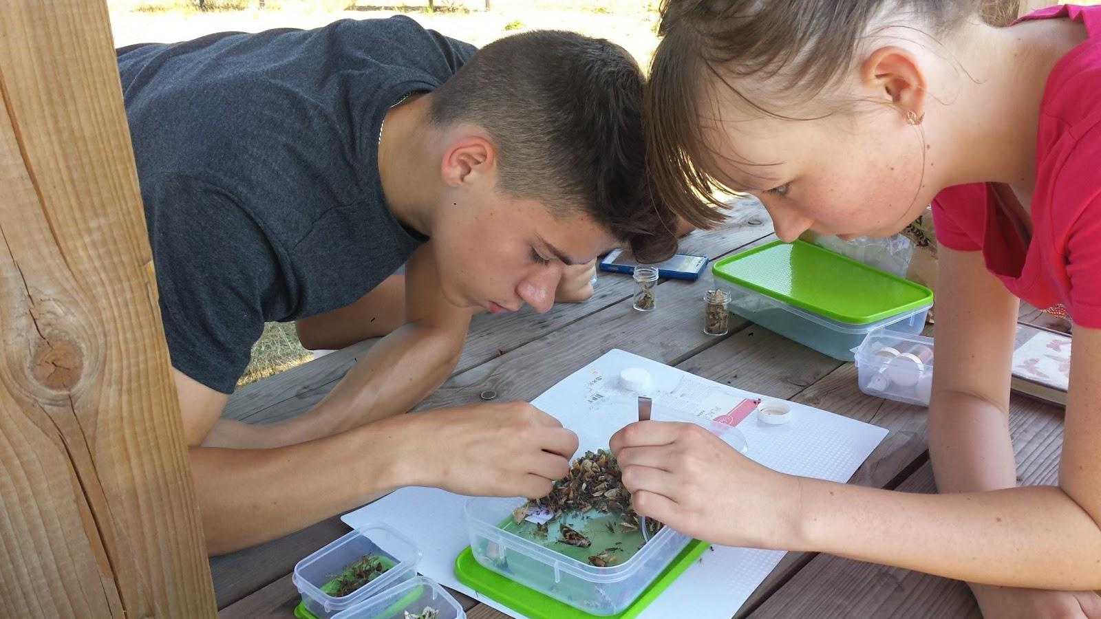 Open Science Schooling